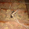 More electrical splices without a junction box